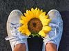 Fallen Sunflower