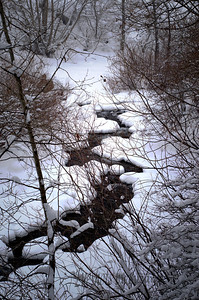 Snow covered stream on our walk at Boulder Canyon during Rocky the blizzard