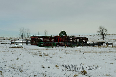 The Cattle Car -  now used as a shelter - as Rocky starts to move in - near Superior, CO