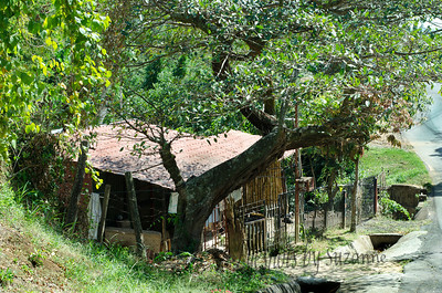 Local home on our stroll through the hills outside of Atenas, Costa Rica