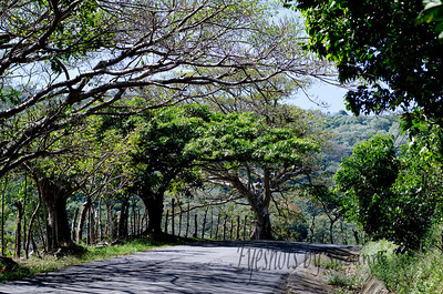 Trees used as living fences line the roads outside Atenas, Costa Rica.