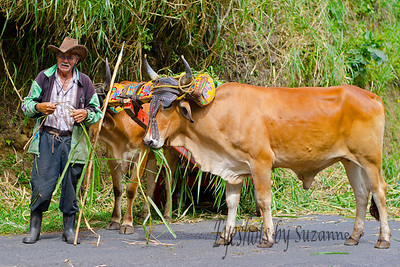 Road to LaPaz Waterfall Gardens, I jumped out of our truck and snapped this photo.  The beautiful painted oxen yokes are a tradition in Costa Rica.