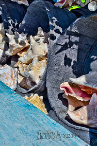 Conch Shells at Mac's Sea Garden Key West Florida