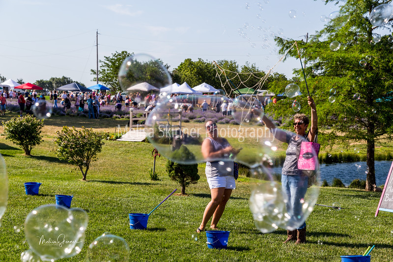Gertie's Lavender Farm - Lavender Festival