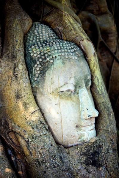 Buddha in a Tree, Ayutthaya