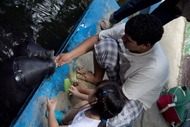 Angela feeds the Manatee's<br /> Angela alimenta a los Manatis