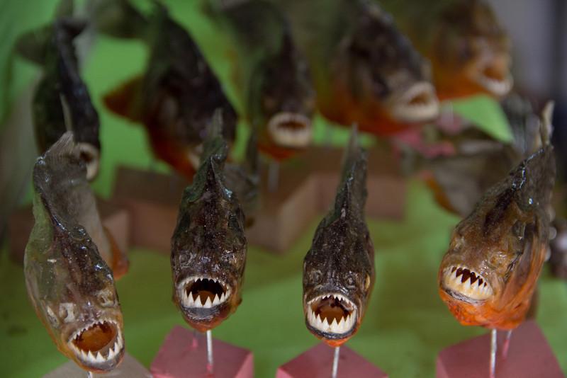 Piranhas al ataque