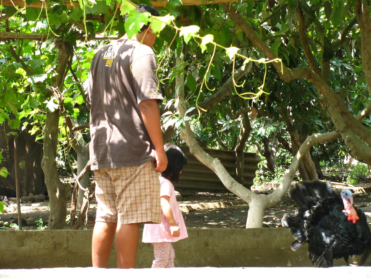Coco y Angela conocen al pavo...