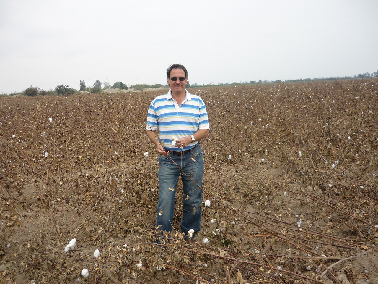 In the cotton fields.<br /> En los sembrios de algodon.