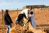 Al Ain Camel Ride