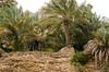 Al Gawa Pools