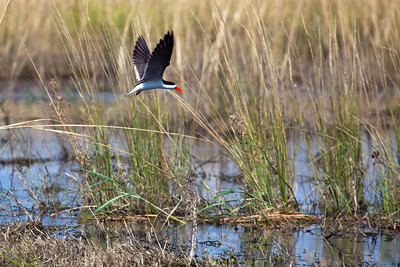 Chobe river, Botswana.