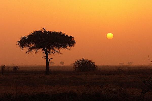 Sunset over Waza park, Extreme-North, Cameroon.