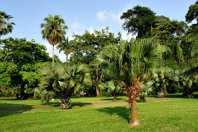 Botanic garden, Limbe, Cameroon.