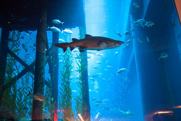 Sharks from the Dubai mall, Dubai, UAE.