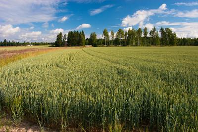 Countryside near Helsinki, Finland.