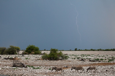 Storm coming in the background, Etosha National park, Namibia.
