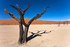 Petrified tree from Sossusvlei, Namibia.