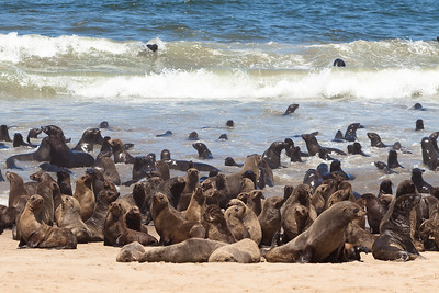 Sea Lions on the beach of Walvis Bay, Namibia.