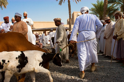 Scene from the Nizwa market close to the fortress, Sultanate of Oman.