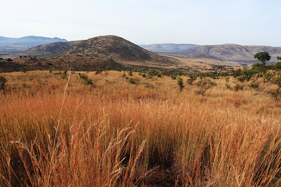 Landscape (former volcano) from the Pilanesberg park, South Africa.