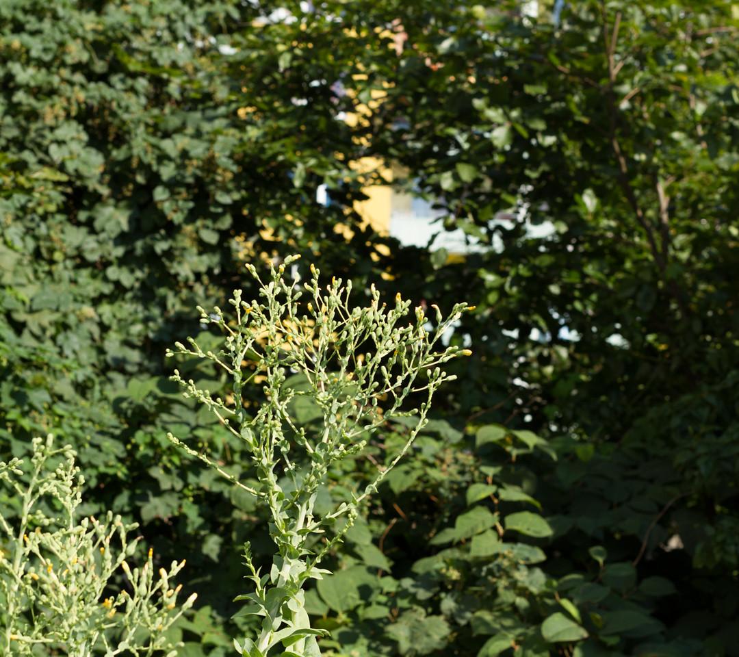 hamburg_2015-08-23_155458