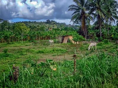 Costa Rica Countryside