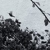 """Hummingbird Bonus"""