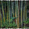 "May 2, 2012 - ""Field Of Bamboo"""