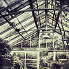 """April 28, 2012 - """"Indoor Jungle""""<br /> <br /> For more photos shot inside this greenhouse at Bellingrath Gardens in Alabama go to<br /> <br /> <a href=""""http://www.dakotacowboyphotography.com/Travel-USA/Alabama/Bellingrath-Gardens-Greenhouse/22647230_2dfWr5#!i=1814144282&k=h98QZPm"""">http://www.dakotacowboyphotography.com/Travel-USA/Alabama/Bellingrath-Gardens-Greenhouse/22647230_2dfWr5#!i=1814144282&k=h98QZPm</a>"""