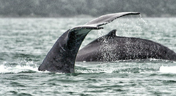 Whales And Rain