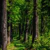 Pea Ridge Forest