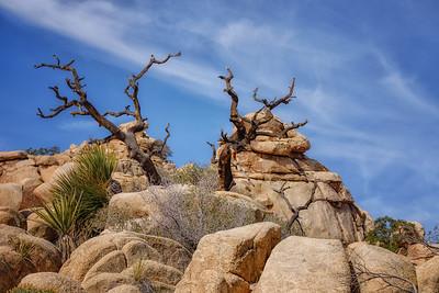 Desert Detail
