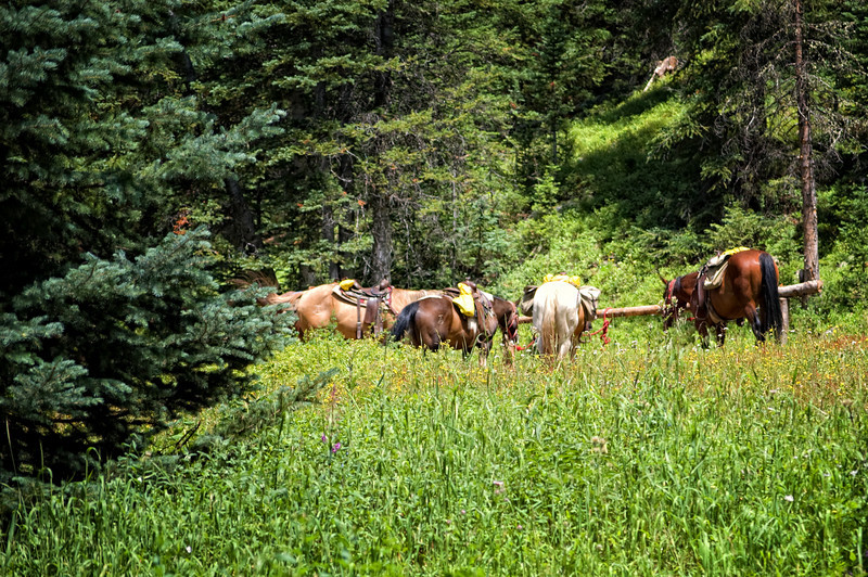 """""""Horses At Beaver Lake""""<br /> <br /> This photo was taken after a long 1500 ft. ascent, on foot, to Beaver Lake in Colorado. The horse riders were by the lake having lunch and fly fishing! Horses might be the mode of transportation for me, when I have the desire to see this beautiful lake again.<br /> <br /> This hike is classified as strenuous by <a href=""""http://www.localhikes.com"""">http://www.localhikes.com</a>"""