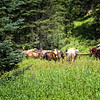 """Horses At Beaver Lake""<br /> <br /> This photo was taken after a long 1500 ft. ascent, on foot, to Beaver Lake in Colorado. The horse riders were by the lake having lunch and fly fishing! Horses might be the mode of transportation for me, when I have the desire to see this beautiful lake again.<br /> <br /> This hike is classified as strenuous by <a href=""http://www.localhikes.com"">http://www.localhikes.com</a>"
