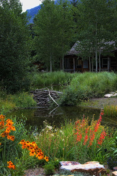 """""""Cabin By Beaver Dam""""<br /> <br /> This non-creatively entitled scene is actually in the Betty Ford Alpine Gardens in Vail, Colorado. This is the cabin where the garden volunteers meet to start their work assignments.<br /> <br /> The pond is also part of the headwaters for a sequence of water falls."""