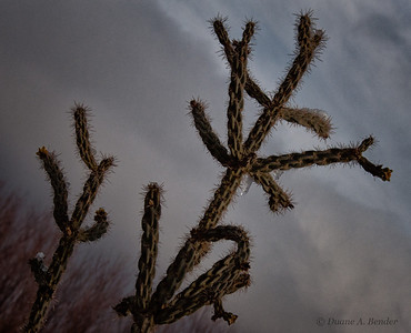 "December 13, 2011 - ""Ice On The High Desert""  A cold morning at Bosque del Apache."