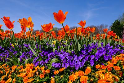 Dallas Springtime