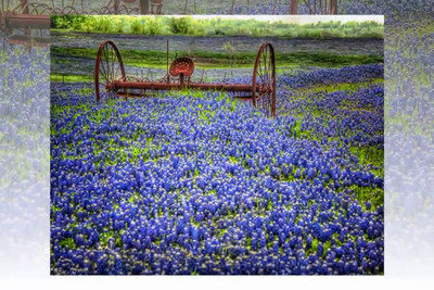 """On The Ennis Bluebonnet Trail""  a short slide show of photos taken in late March 2012"