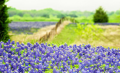 "April 1, 2012 - ""Beyond Bluebonnets"""