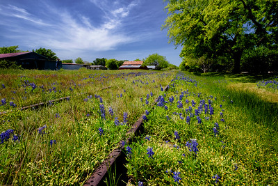 Rails And Bluebonnets