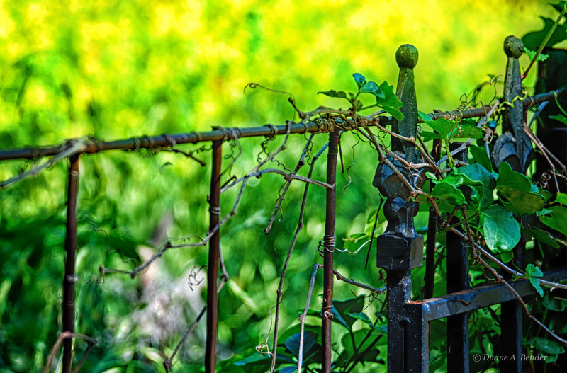 """April 7, 2012  - """"Springtime Yellow""""<br /> <br /> The wildflowers were brightly yellow beyond this fence yesterday at Bob Jones Nature Center in Southlake, Texas."""