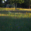 """Buckboard At Blossom Prairie"""