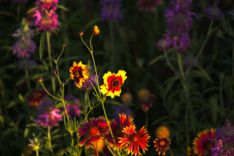 """""""Prairie Blossoms"""""""
