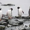 Keeping up appearances among the penguins on Danco Island