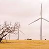 Wind farm near Edithburgh on York Peninsula