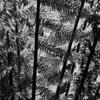 Giant ferns in Otway National Park