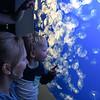 Jellies in the Monterey Bay aquarium