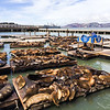 Smelly seals at Pier 39