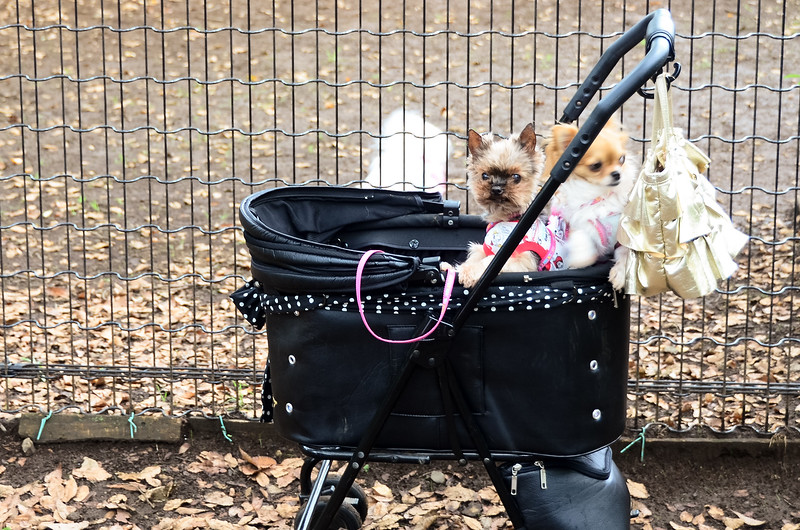 Yes, there are prams for dogs in Japan.  Yoyogi Park in Tokyo has some weird stuff